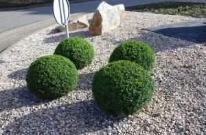 Buxusbollen op een rotonde