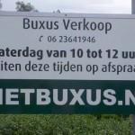 buxus verkoop